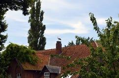 Storch-ciconia ciconia Lizenzfreie Stockbilder