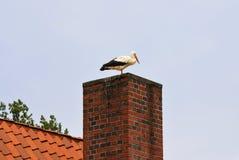 Storch-ciconia ciconia Stockfotografie