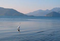 Storch, der auf das Meer geht Lizenzfreie Stockbilder