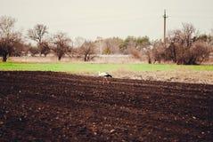 Storch, der auf dem Gebiet geht Lizenzfreie Stockfotografie