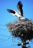 Storch, der geht, weg zu fliegen Stockbild