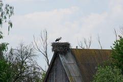 Storch, der im Nest steht Lizenzfreies Stockbild