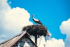 Storch, der in seinem Nest sitzt lizenzfreie stockfotografie