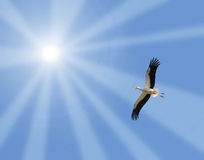 Storch, der zur Sonne fliegt Lizenzfreies Stockfoto