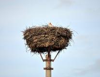 Storch in einem Nest Lizenzfreie Stockfotos