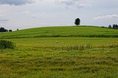 Storch in einer grünen Wiese Einzelner Baum im Hintergrund Bewölkter Himmel, Schönheit des Dorfs Lizenzfreies Stockbild