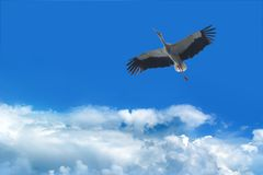 Storch im Himmel stockfotos