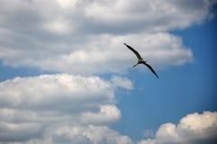 Storch im Himmel Lizenzfreies Stockbild