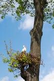 Storch im Nest lizenzfreies stockbild