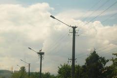 Storch im Nest Lizenzfreie Stockfotografie