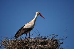 Storch im Nest stockbilder