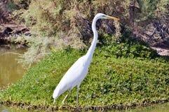 Storch mit langem elegantem Hals Stockfotografie