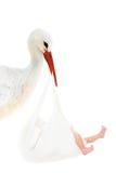 Storch mit Schätzchen im weißen Beutel Stockbild