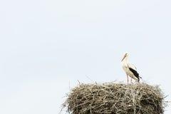 Storch in seinem Nest Stockfoto