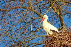 Storch in seinem Nest lizenzfreie stockbilder
