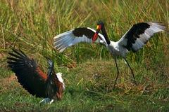 Storch und Adler Stockfotografie