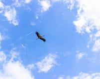 Storch und Flugzeug Lizenzfreie Stockfotografie