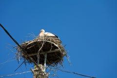 Storch und sein Nest. Stockbild