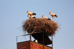 Storchfamilie lizenzfreie stockfotografie