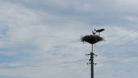Storchfamilie in seinem Nest auf einer Säule Geschossen auf Kennzeichen II Canons 5D mit Hauptl Linsen stock video