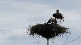 Storchfamilie in seinem Nest auf einer Säule Geschossen auf Kennzeichen II Canons 5D mit Hauptl Linsen stock video footage