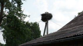 Storchfamilien-Vogelnest stock video footage