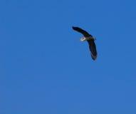 Storchflugwesen Stockbild