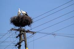 Storchpaare auf Nest auf dem Pol über blauem Himmel Stockfoto