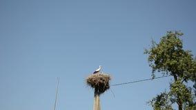 Storchvogelfamilie im Nest auf Strompfosten auf blauem Himmel stock video