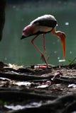 Storck photographie stock libre de droits