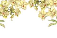 Storczykowa kwiat granica Obrazy Royalty Free