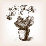 Storczykowa ręka rysujący kwiatu nakreślenia stylu wektor Zdjęcia Royalty Free