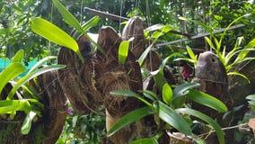 Storczykowe rośliny Zdjęcia Royalty Free