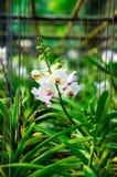 Storczykowe rośliny Zdjęcie Stock