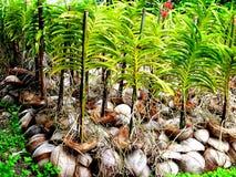Storczykowe rośliny Zdjęcie Royalty Free