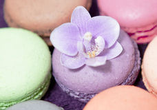 storczykowi kolorowi macaroons Fotografia Royalty Free