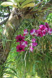 Storczykowi kwiaty Fotografia Royalty Free