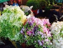 Storczykowi kwiaty przy kwiatem wprowadzać na rynek w Bangkok Fotografia Royalty Free