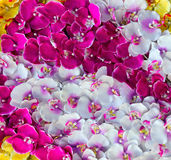Storczykowy dekoraci tło Fotografia Stock