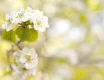 Storczykowy kwiat Zdjęcia Royalty Free