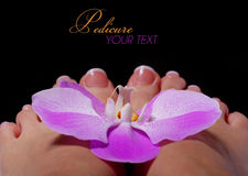 Storczykowy kwiat na Pięknych Żeńskich ciekach z Francuskim manicure'em Fotografia Stock