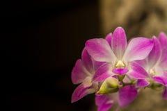 Storczykowy kwiat w tropikalnym ogródu zakończeniu up szczegółowy rysunek kwiecisty pochodzenie wektora zdjęcia stock