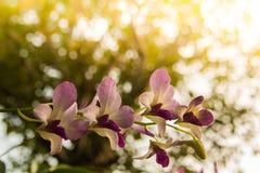 Storczykowy kwiat w tropikalnym ogródu zakończeniu up szczegółowy rysunek kwiecisty pochodzenie wektora obrazy royalty free