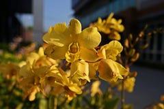 Storczykowy kwiatu punktu disase od grzyb?w fotografia royalty free