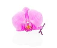Storczykowy kwiatu zakończenie up i aromatyczni kije zdjęcie royalty free
