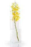 storczykowy wazowy kolor żółty Fotografia Royalty Free