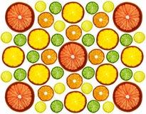 Stordia skivade färgrika frukter på vit bakgrund Cirklar av grapefrukten, citronen, tangerin och apelsinen arkivbild