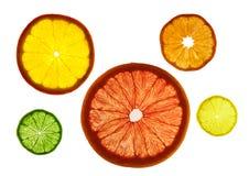 Stordia skivade färgrika frukter på vit bakgrund Cirklar av grapefrukten, citronen, tangerin och apelsinen arkivfoto