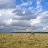 Store Mosse national park, Sweden, nature, dry yellow grass field Stock Photos