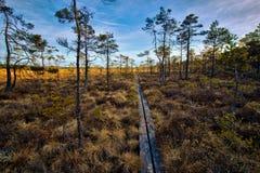 Store Mosse National Park tracks Stock Photos